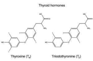 tiroide e intestino